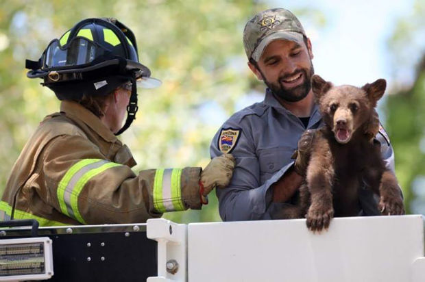 Female bear and two cubs relocated after being found on Fort Huachuca