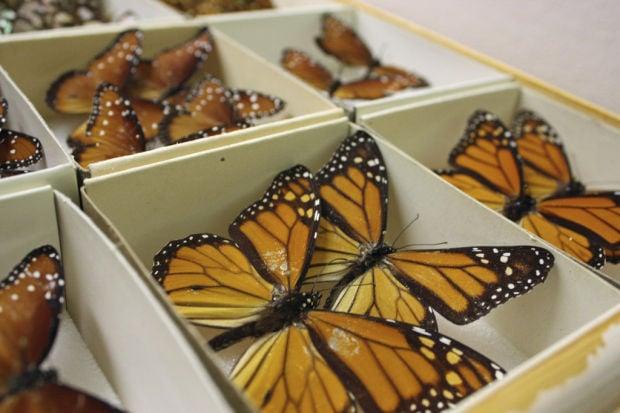 Arizona Insect Festival