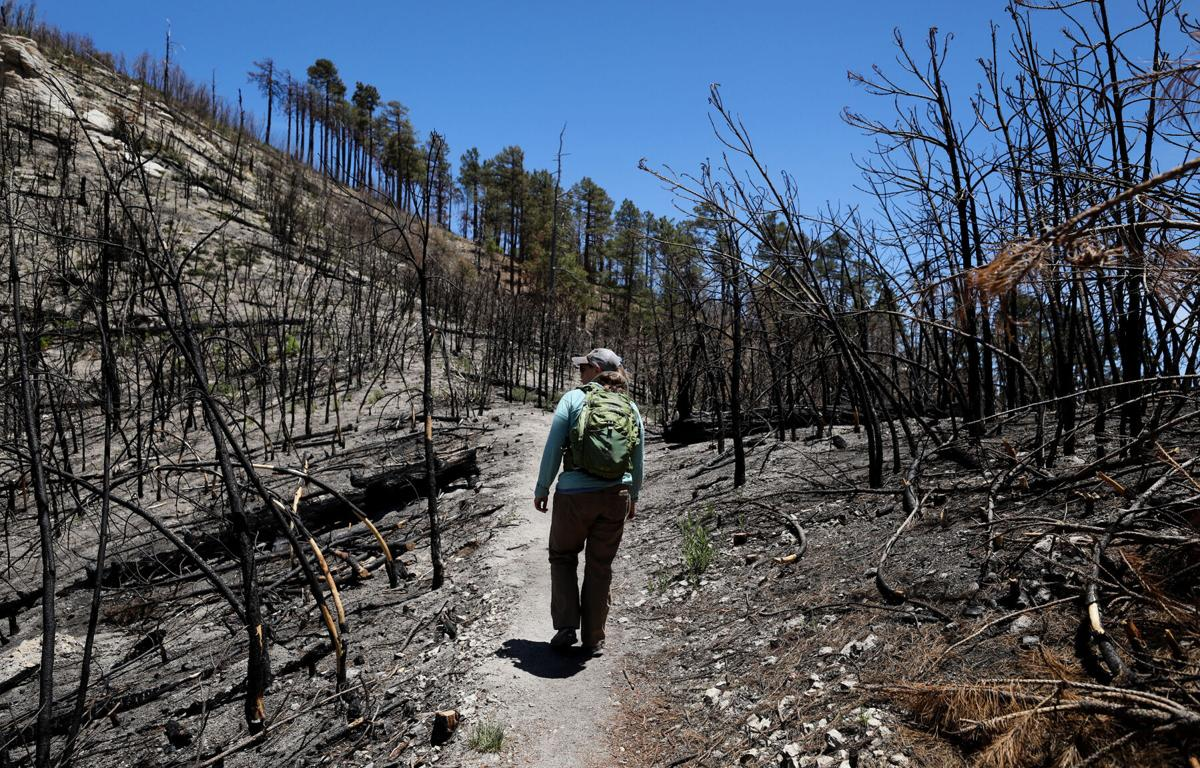 Bighorn Fire in the Santa Catalina Mountains, 2020