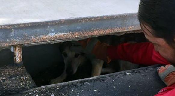 Tucson police: Dog rescued from storm drain