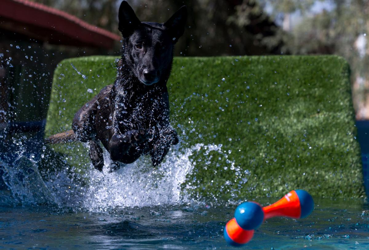 Diving Dogs at Elevate Dog Center