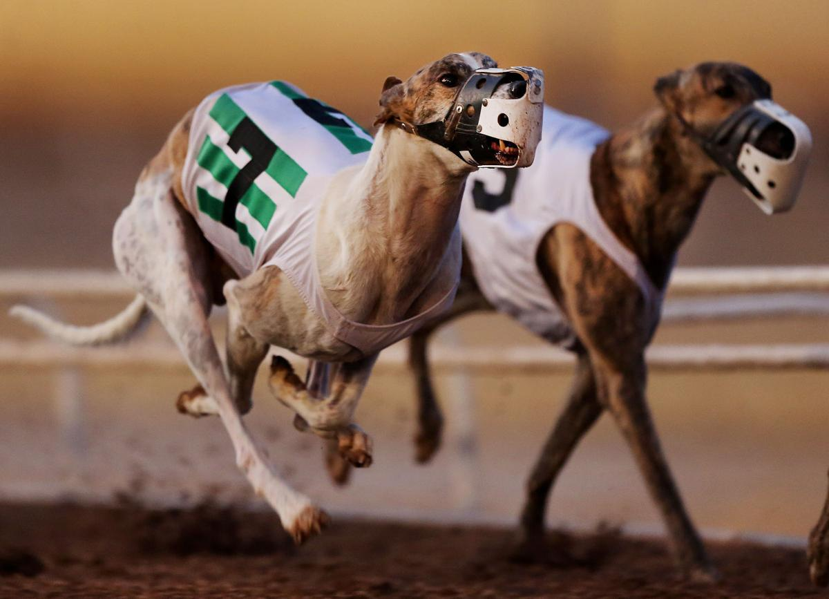 After 72 Years Live Dog Racing Ends At Tucson Greyhound