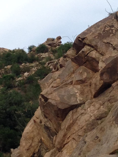 Do you see the lion teen encountered on hike near Tucson?
