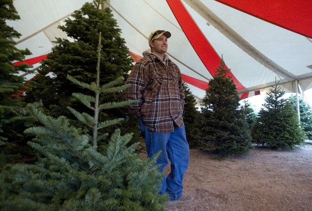Pumpkin farmers selling Christmas trees   News About Tucson and ...