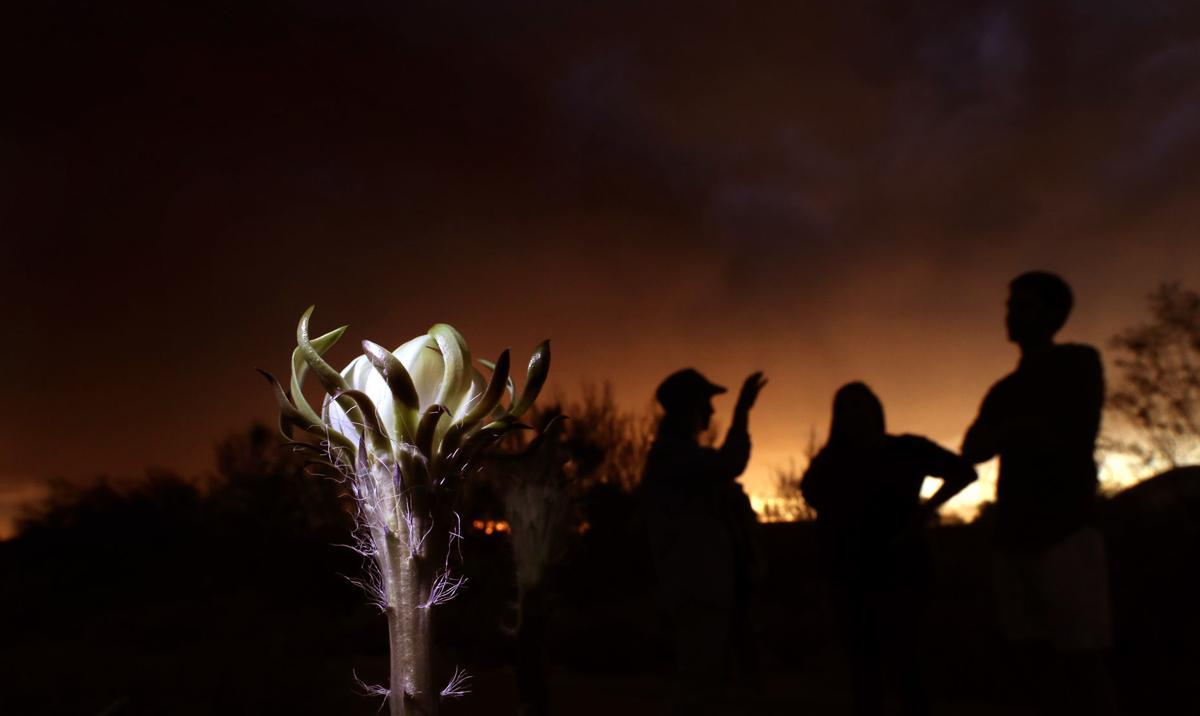 Night-blooming cereus (copy)