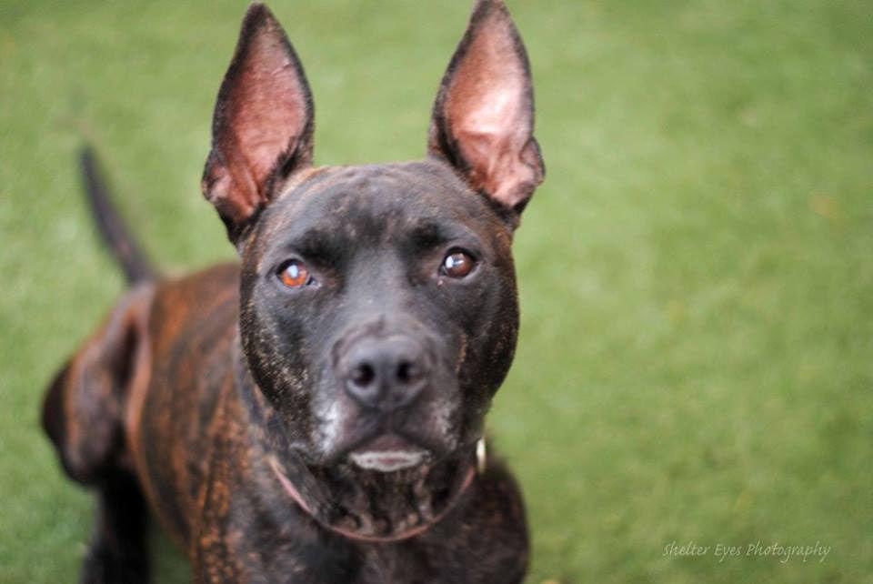 Adopt a Friend | Pets | tucson com