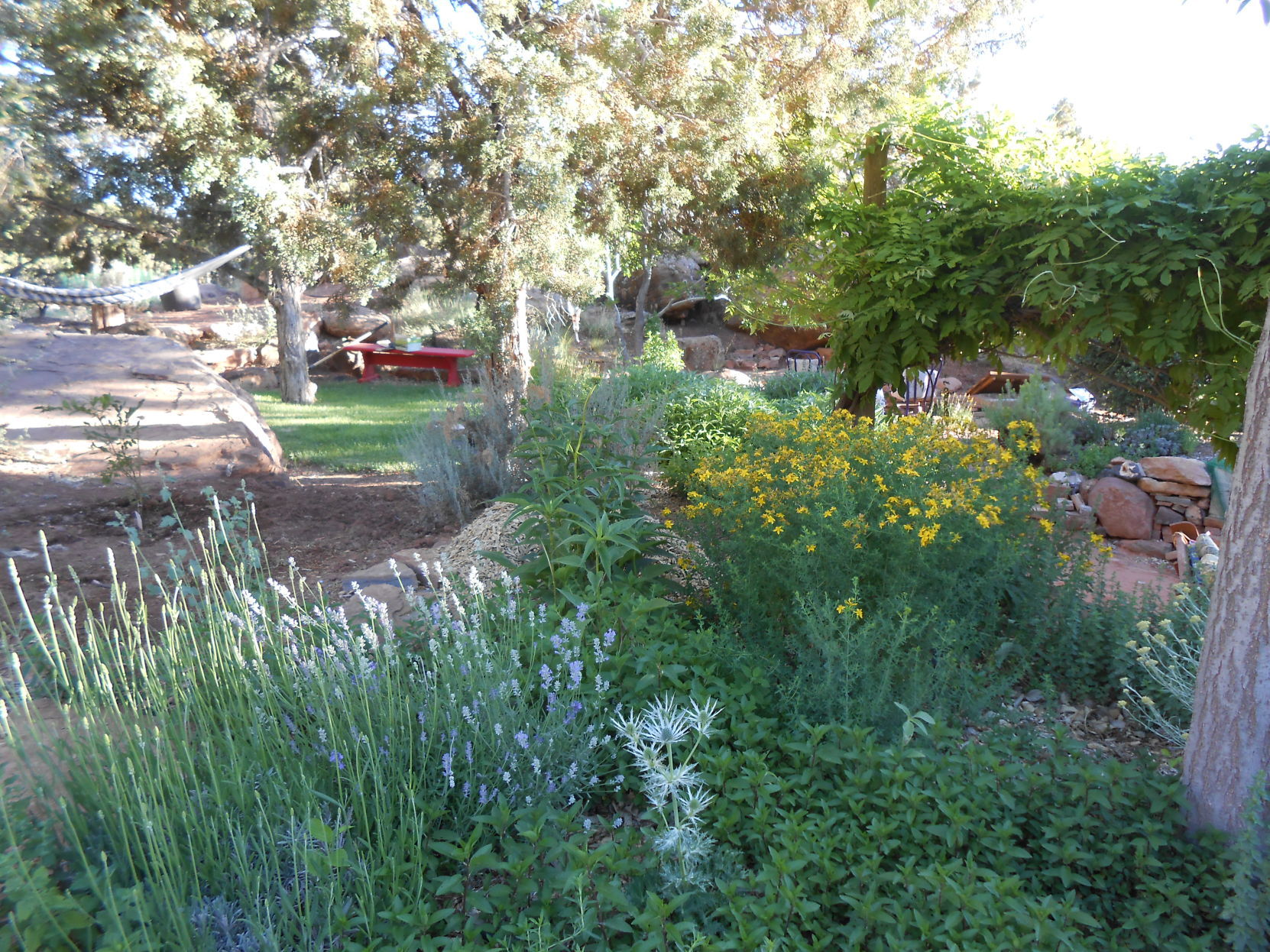 New Book On Southwest Gardening Offers Inspiration, Growth