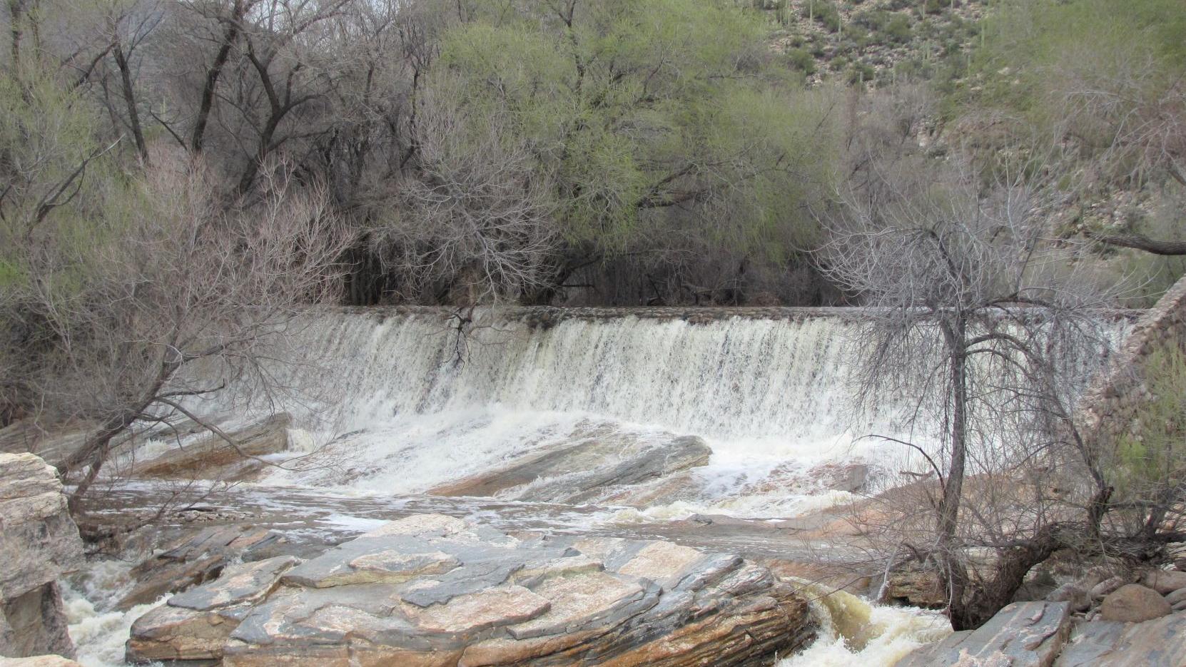 Sabino Creek gushing, wildflowers are blooming in canyon
