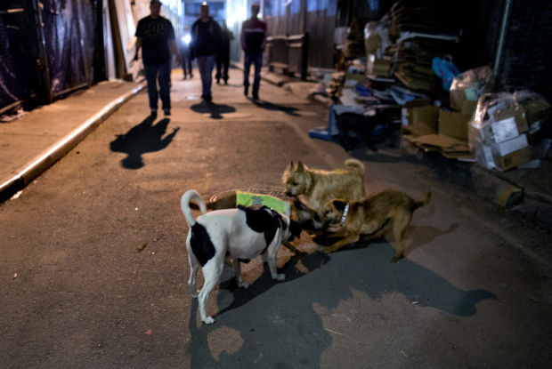 NYC group sics dogs on rats in city's alleys