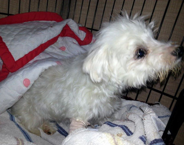 Discovery of injured puppy prompts probe
