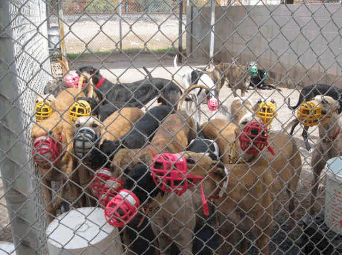 Tucson Greyhound Park