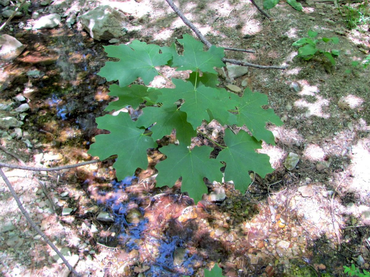 Leaves and small pool