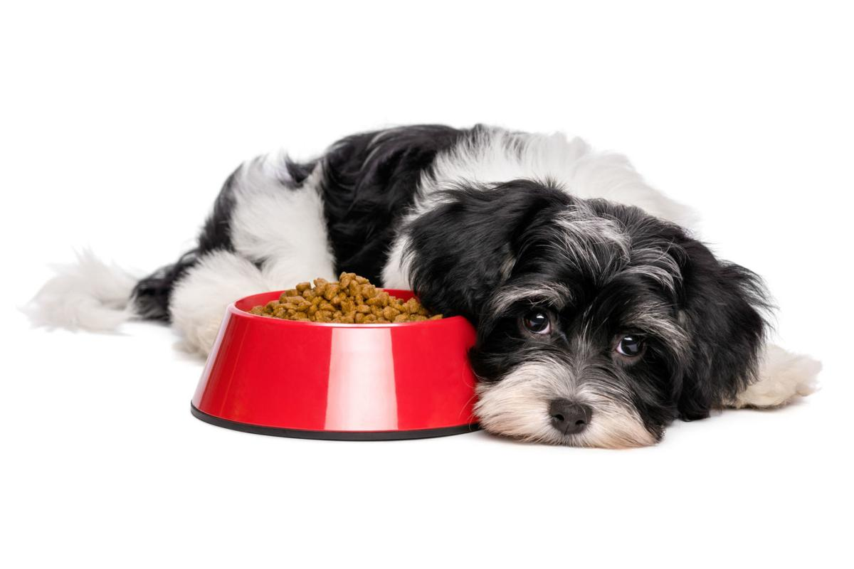 My Pet World: How to help a pet with the loss of another ...