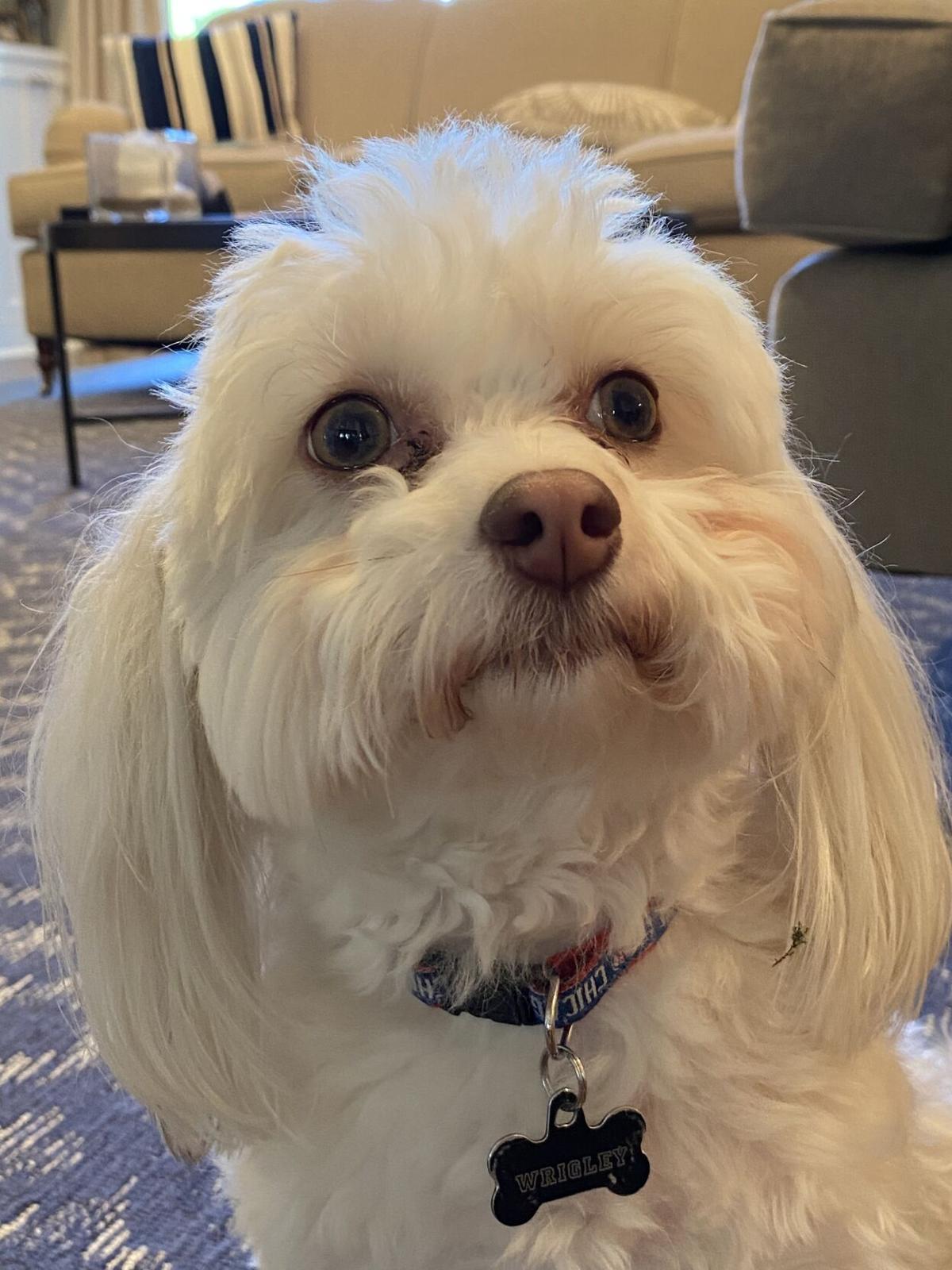 Wrigley---Shelton-s-dog.jpeg