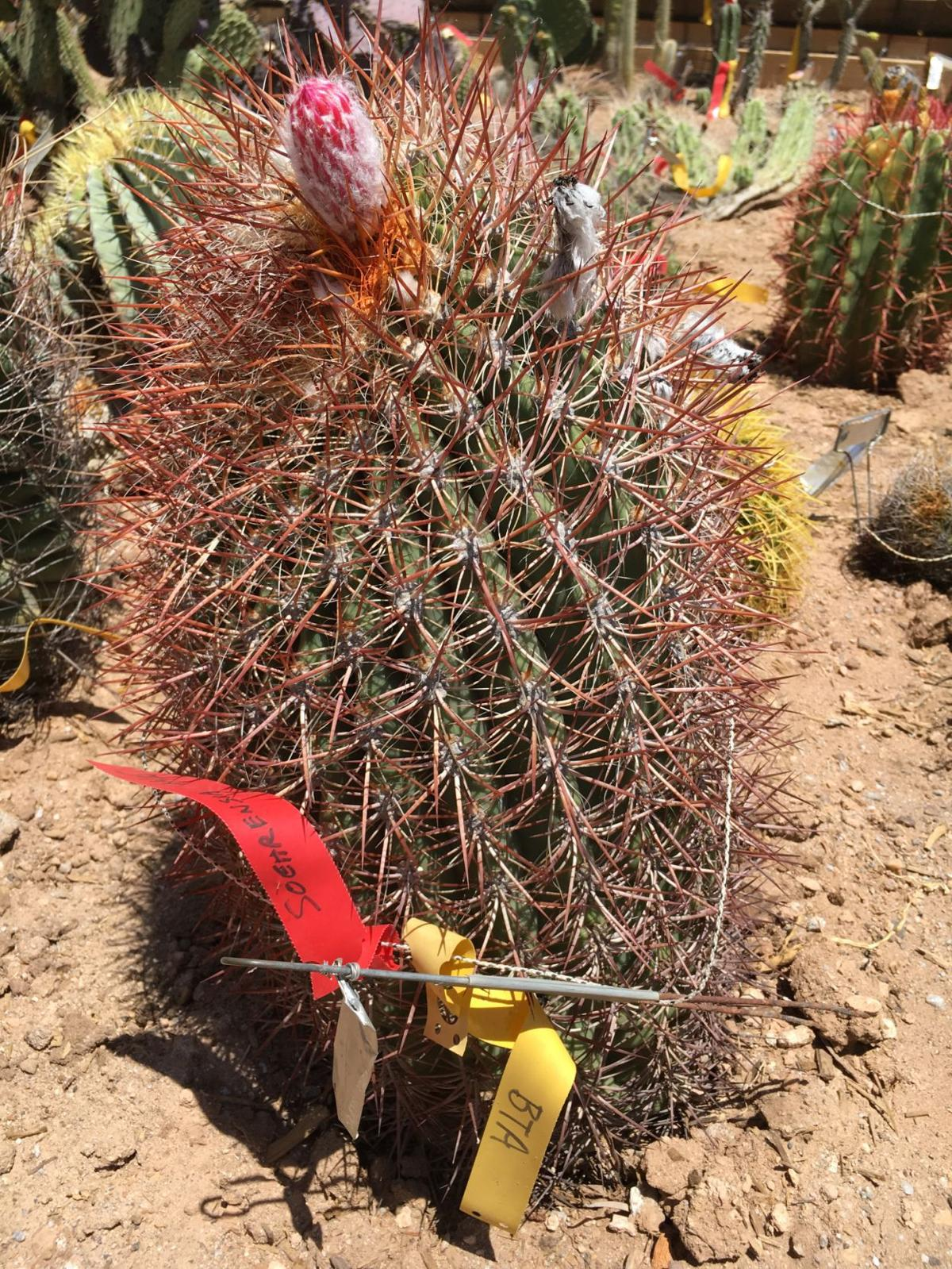 Wallace legacy of preserving desert habitat needs help making ...