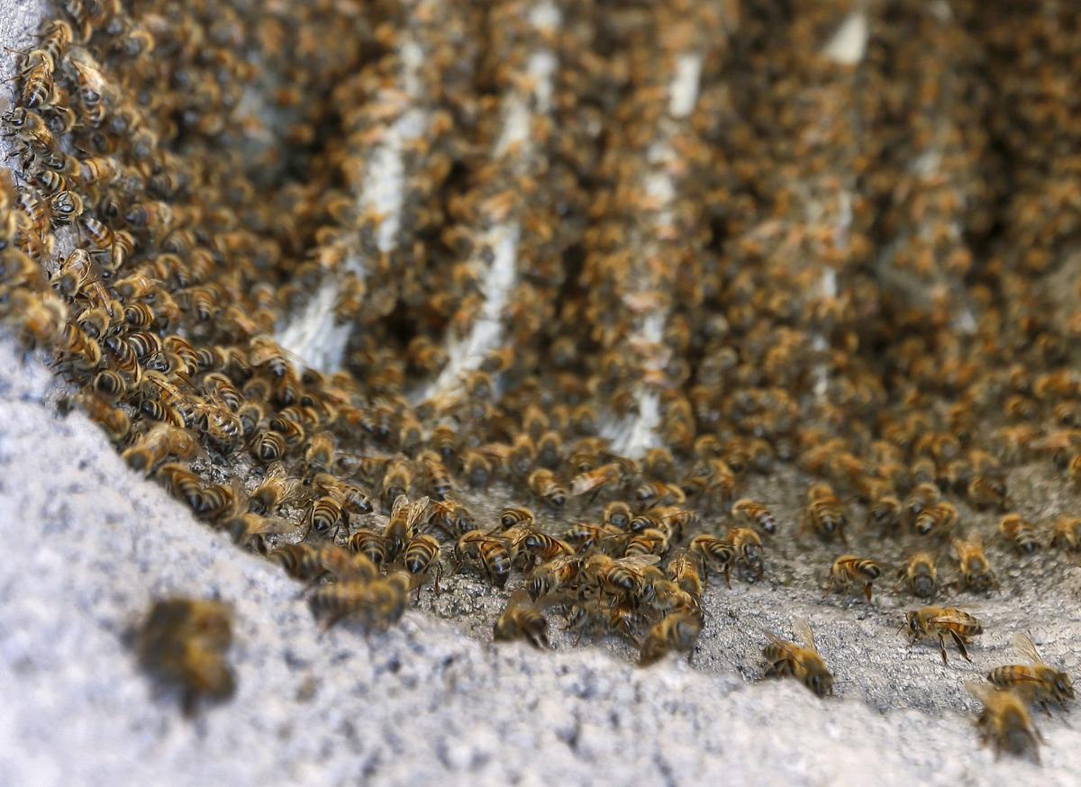 Bee Attacks