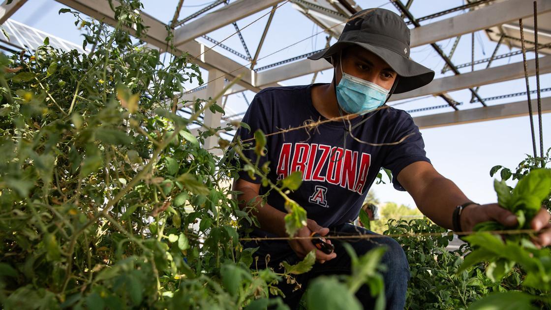 University of Arizona researchers unveil new model for desert farming in warming world