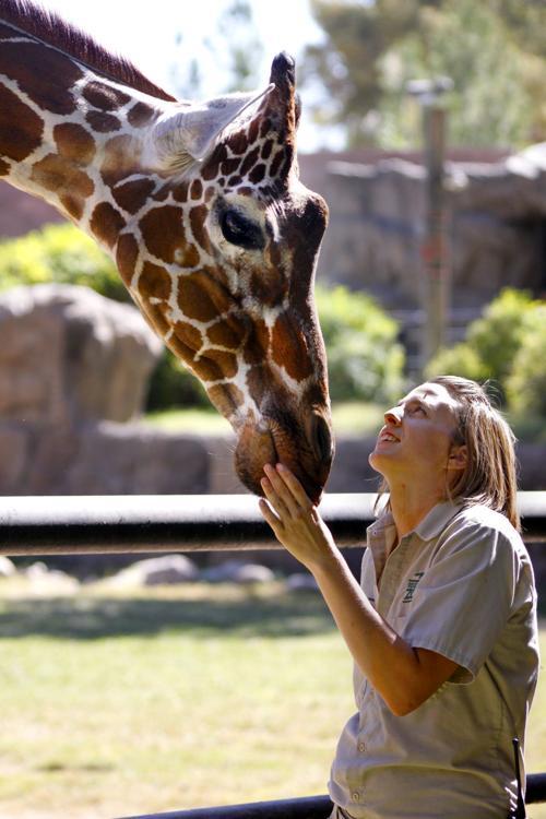 Elinor the giraffe