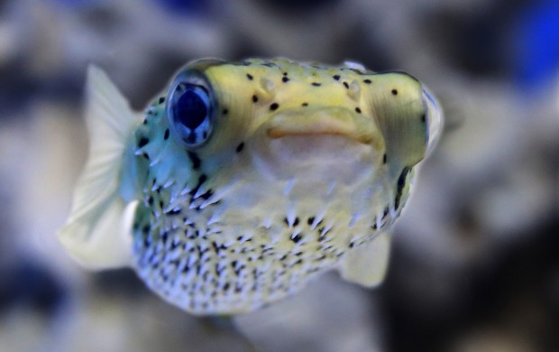 Fresh-, saltwater species of region will be featured