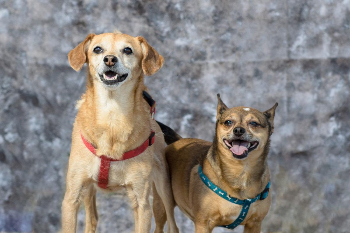Adopt a friend: Toby and Louie