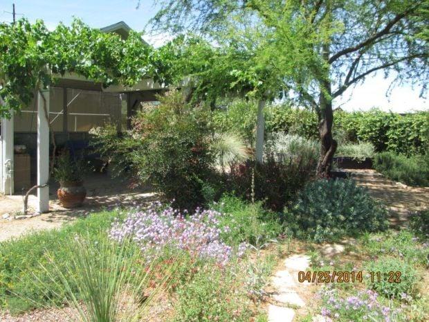 Public Gardens To Explore This Summer Tucson Gardens