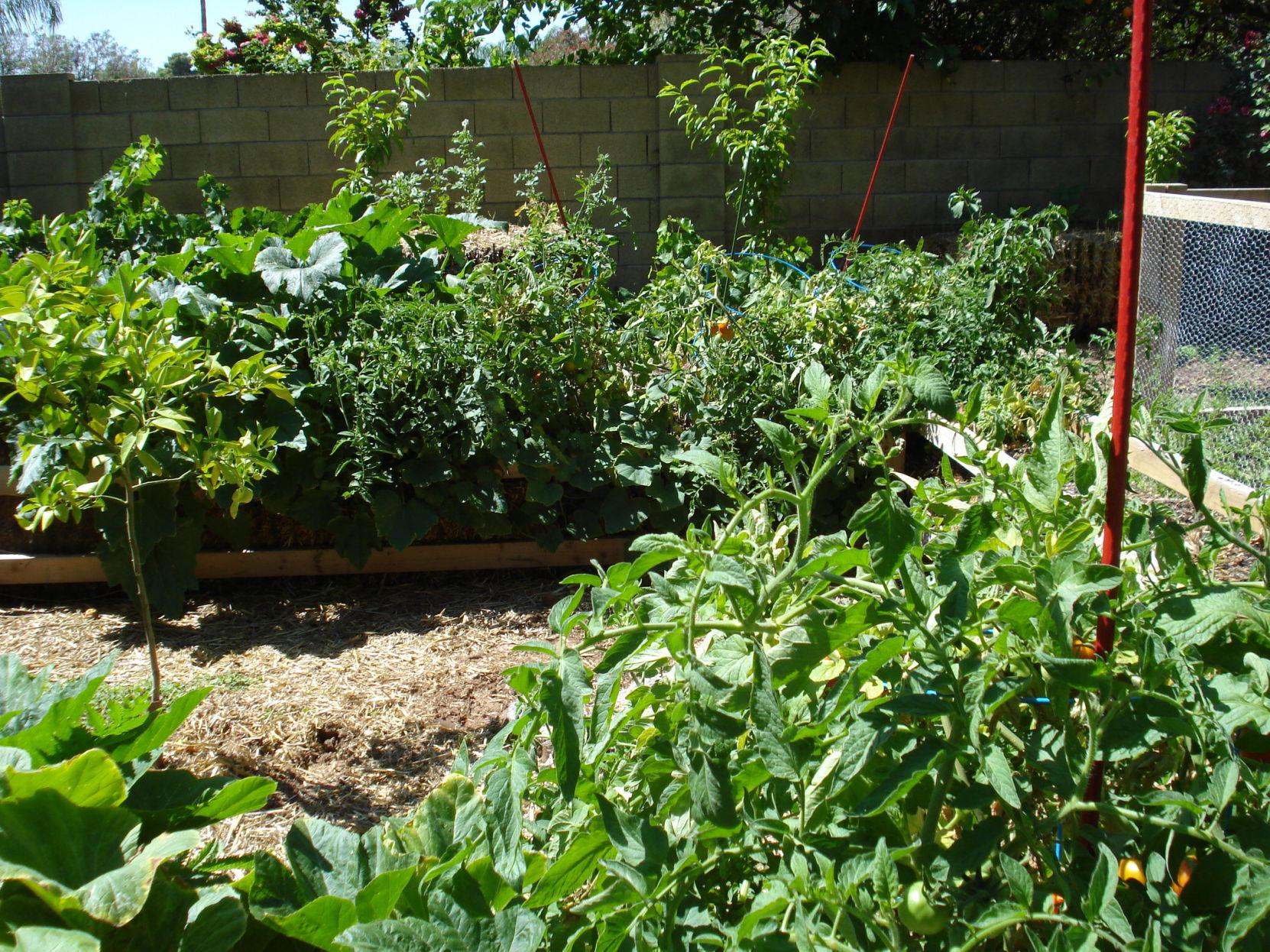 Rosie: Veggie Garden