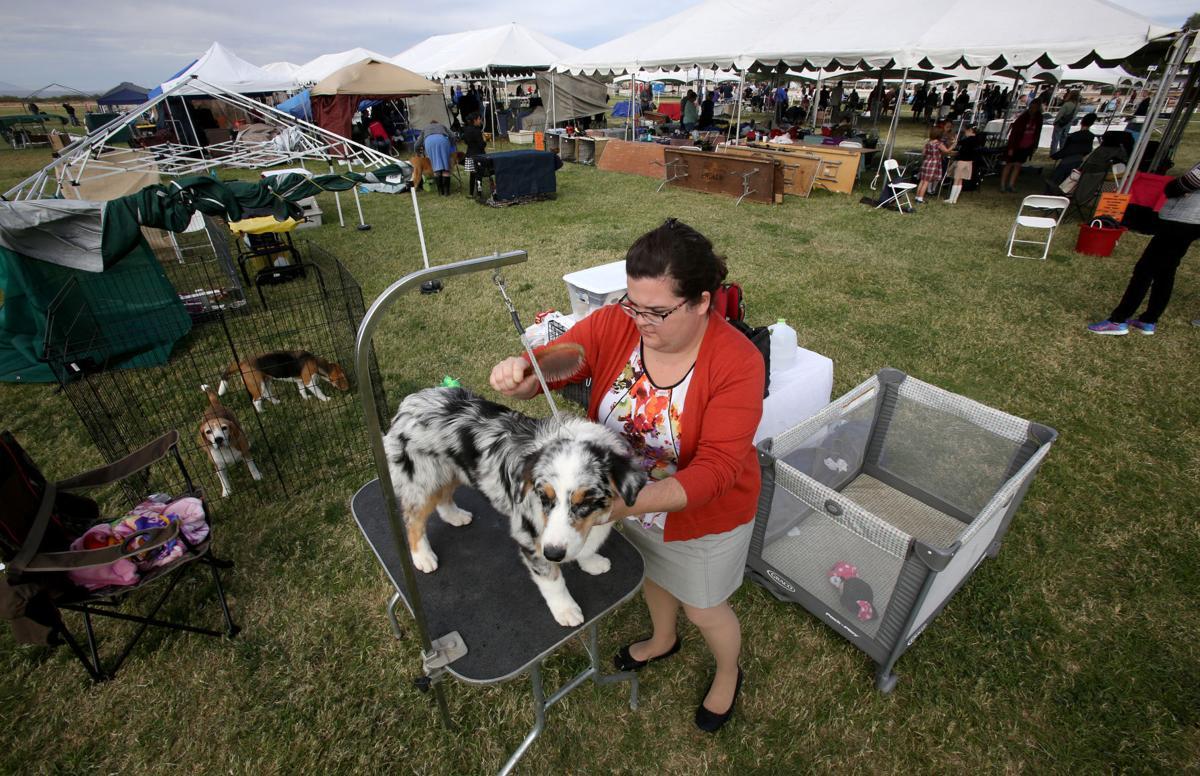 Dog Show Pima County Arizona