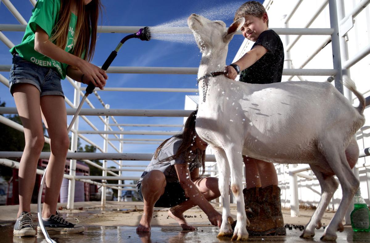 Pima County Fair