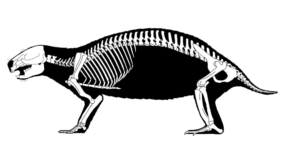Crazy beast' fossil find shows evolutionary weirdness of early mammals |  Science | tucson.com