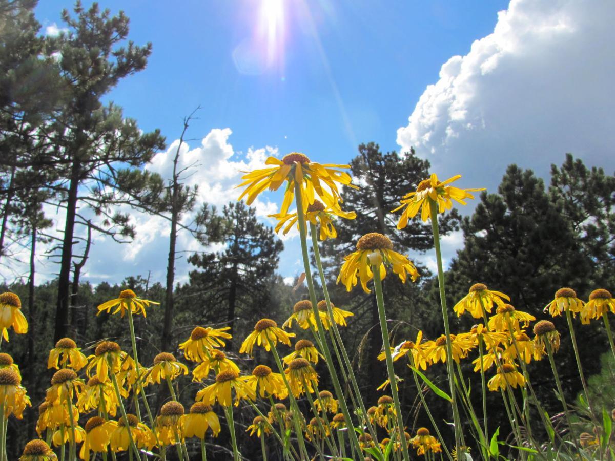 Wildflowers and sun rays