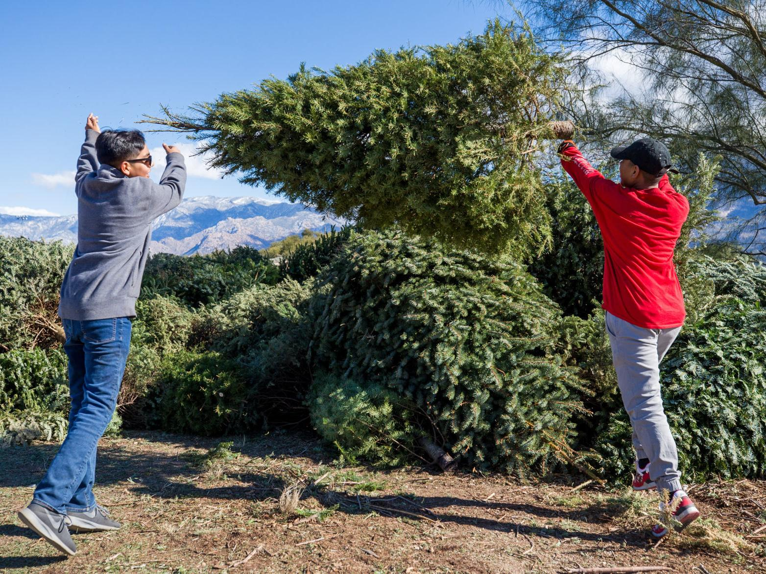 Christmas Tree Recycling Tucson 2020 Sites open around Tucson to take discarded Christmas trees for