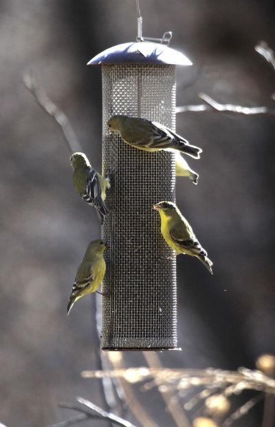 Paton's Birder Haven