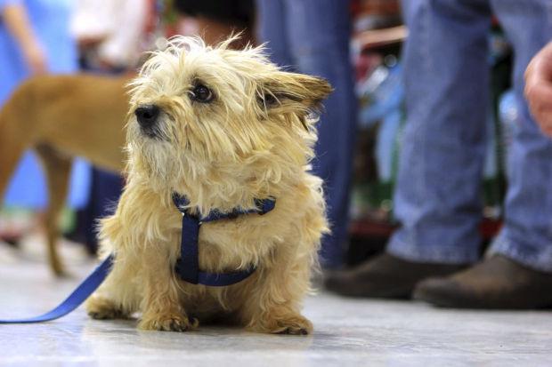 Pima Animal Care Center Adoption