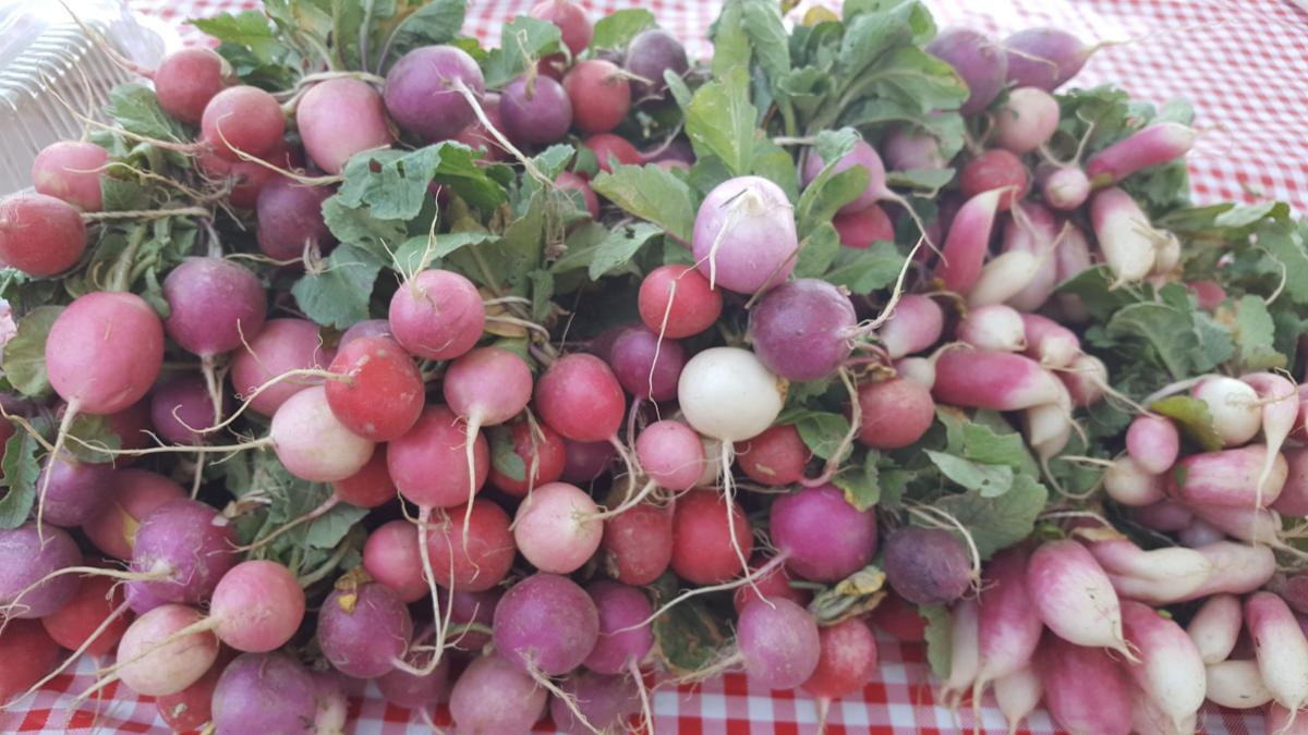 Santa Cruz River Farmers Market