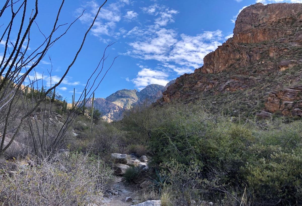 Pima Canyon Trail