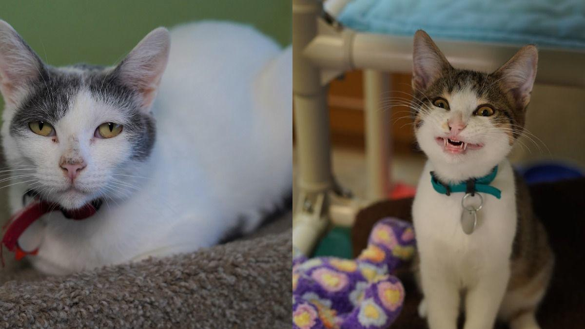 Adopt a friend: WILLOW (mom) and DECKER (son)
