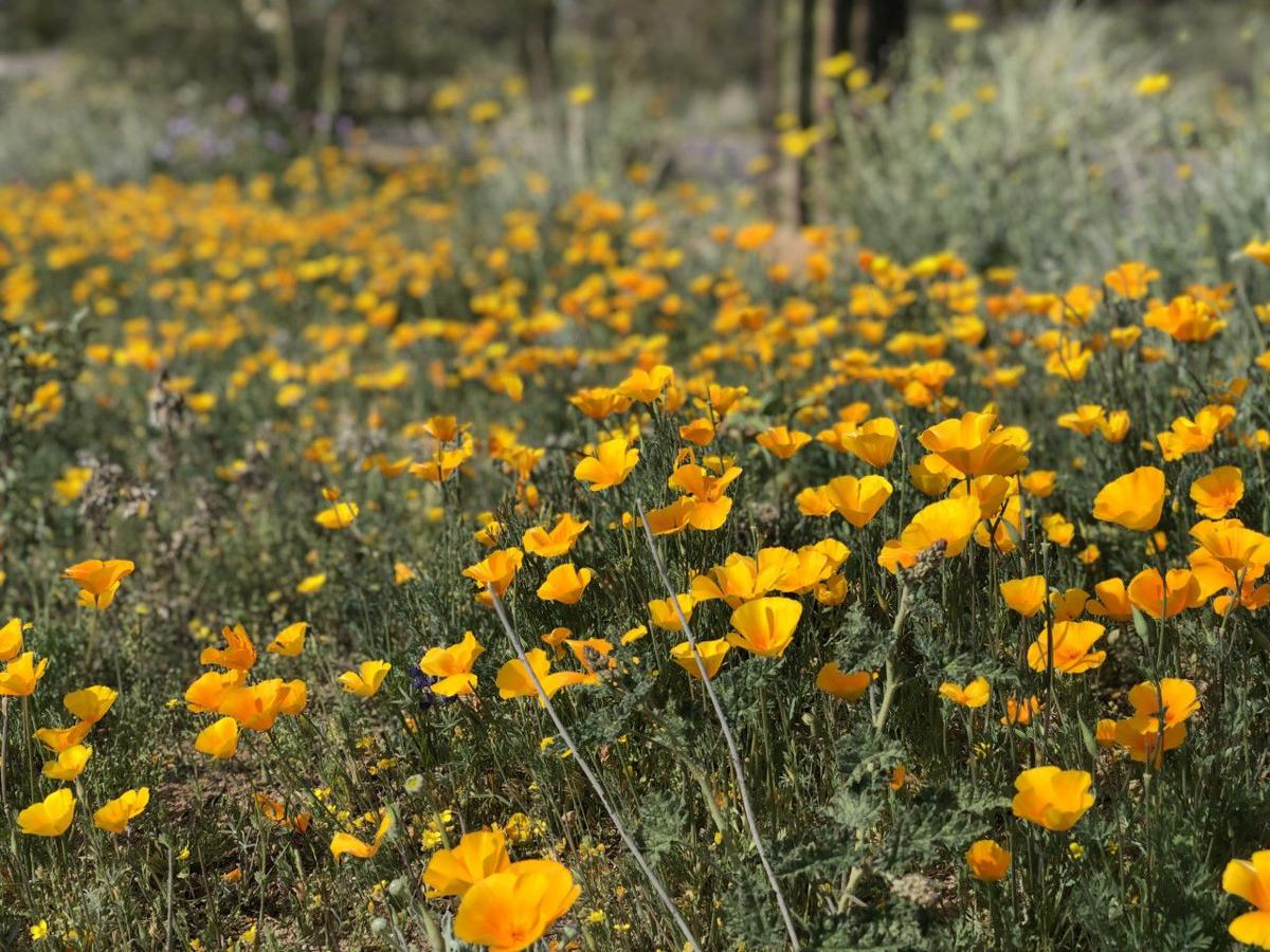 Tangerine Sky Community Park wildflowers