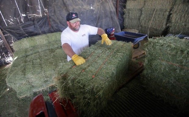 Rising hay prices spur worry