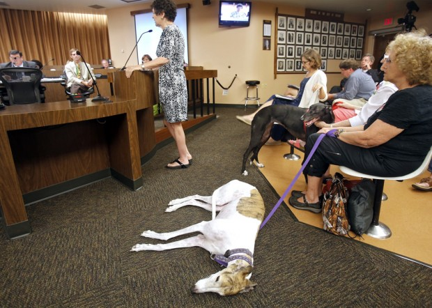 City bans dog steroid injections as way to thwart greyhound track