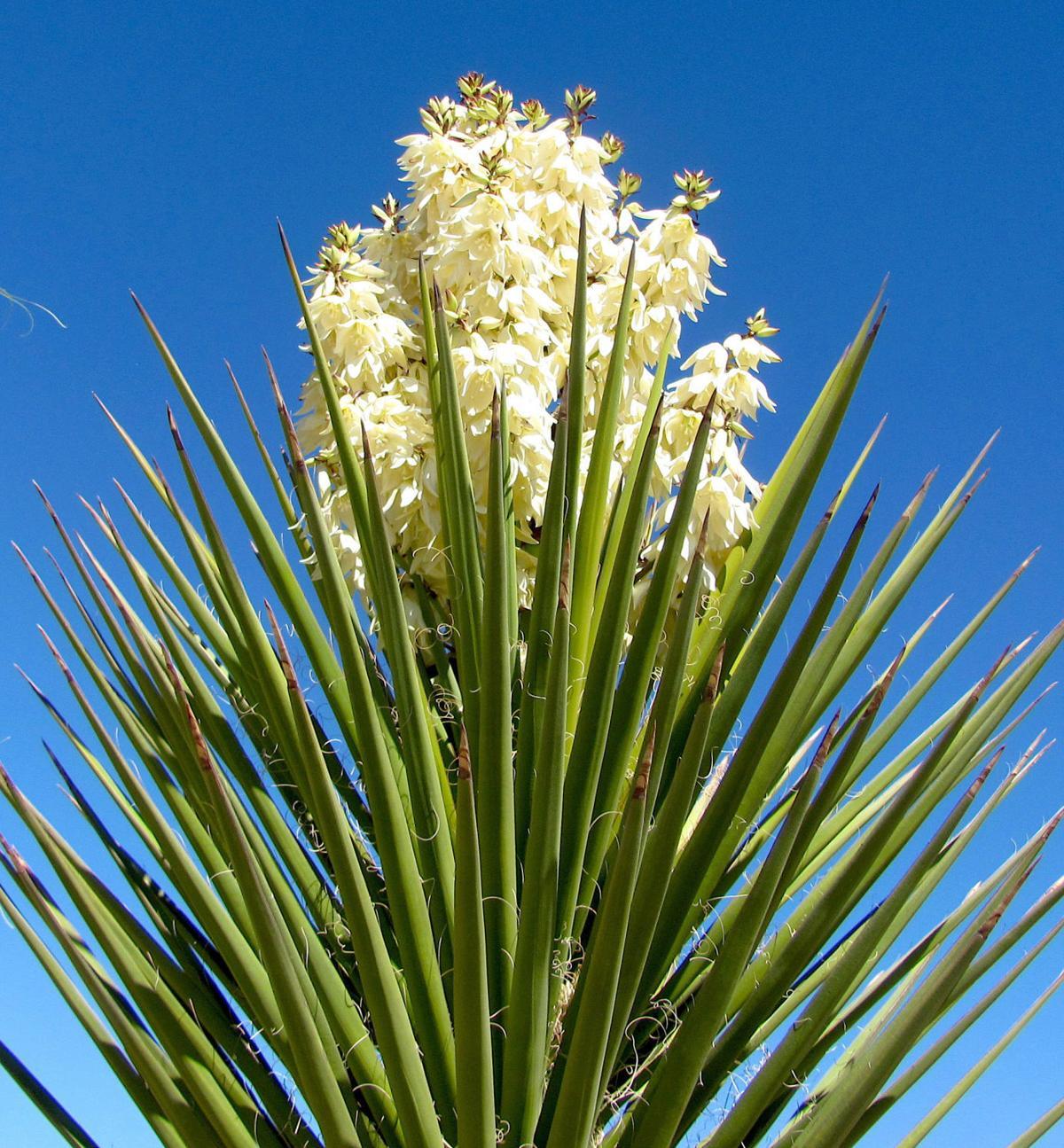 Spring in Tucson