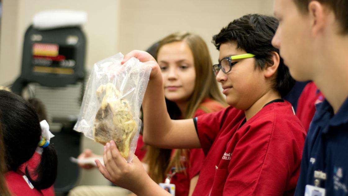 Students get a peek at body parts at Camp Scrubs | | tucson com
