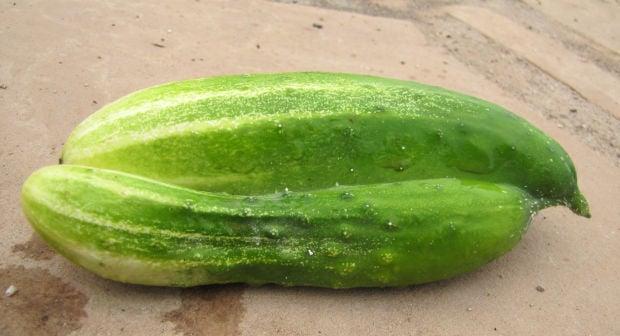 Siamese twin cucumber