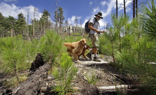 Forest Service, after suit, to drop fees at many recreation sites in Catalinas