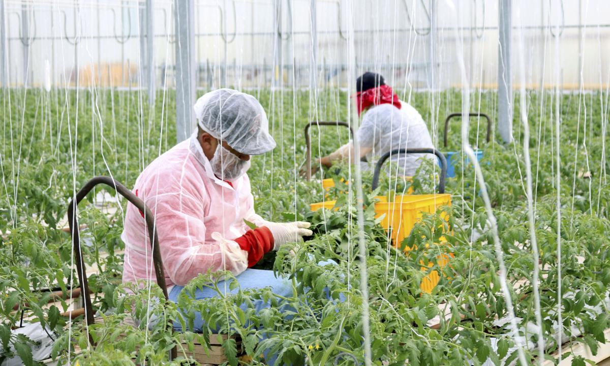 Exchange Farmworker Health (LE)