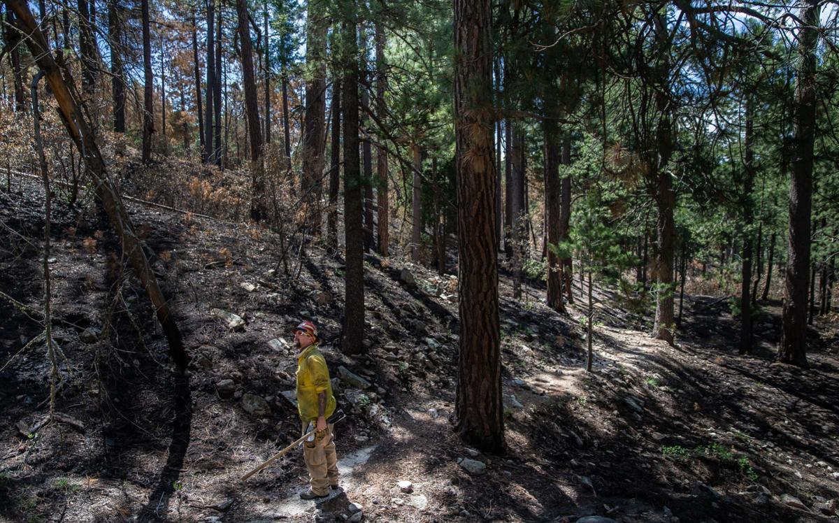 Bighorn Fire burn scar near Palisades Ranger Station