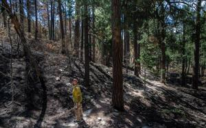 Mount Lemmon hiking trails are minefields of hazards, federal officials say