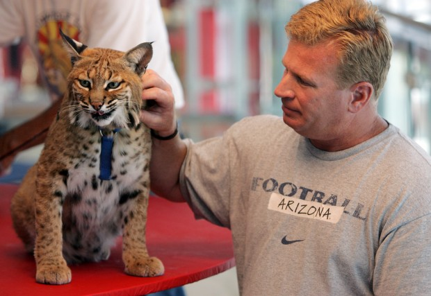 Jim Click Tucson >> Photo gallery: Arizona Wildcats meet a wildcat | Arizona ...