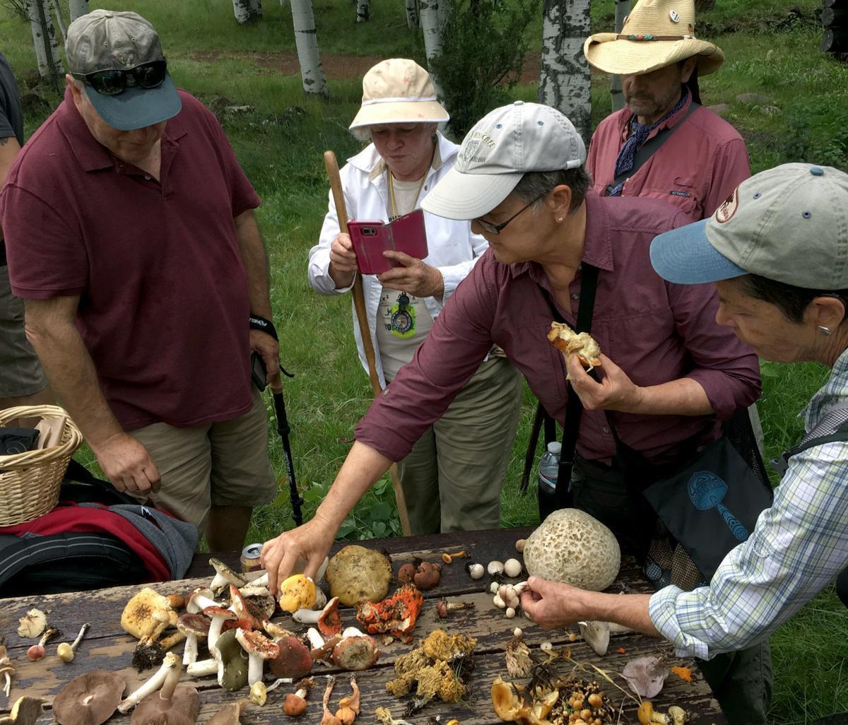 Arizona Mushroom Society