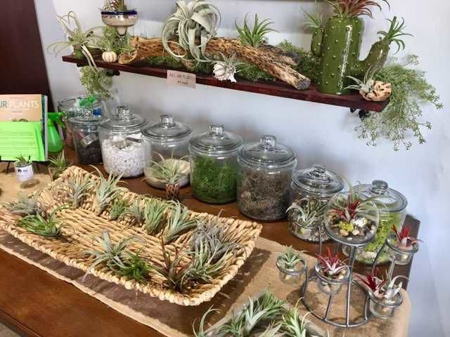 Pot your own air plant at this adorable new northeast side shop diy air plants at this air plant bar at inside out solutioingenieria Gallery