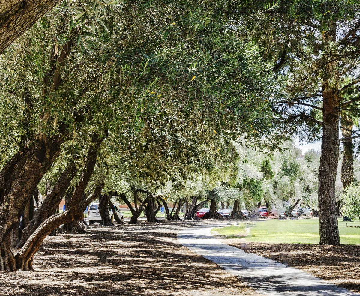 Street Smarts: Olive Road